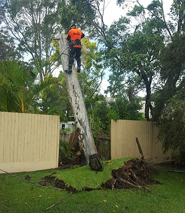 Removing Trees the Have Been Destroyed By a Storm on The Central Coast